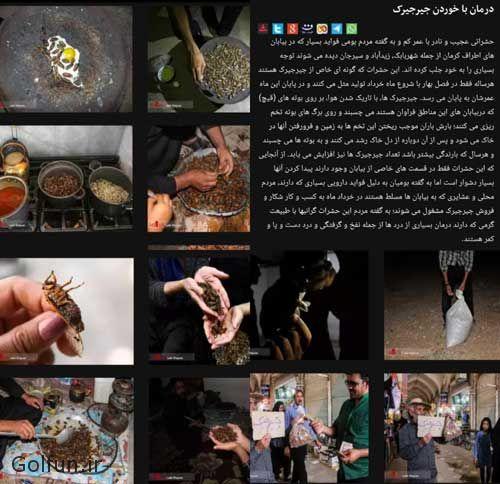 داستان خوردن جیرجیرک در سیرجان کرمان + حکم خوردن جیرجیرک