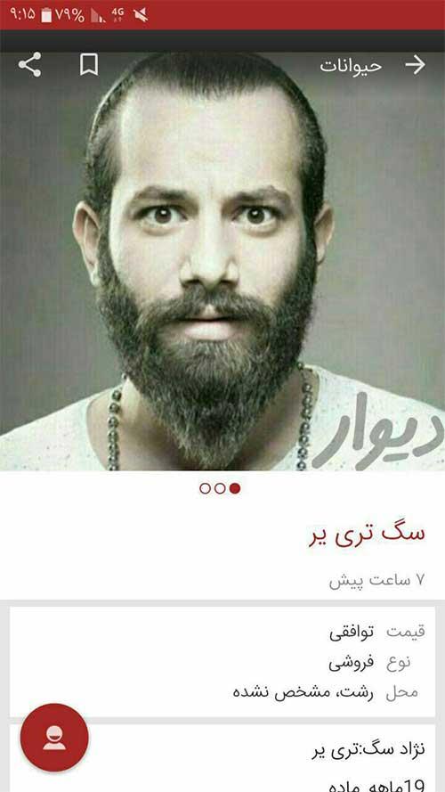 آگهی عجیب در سایت دیوار با عنوان توهین به امیر تتلو سگ تریر + عکس